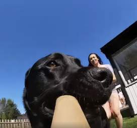dog steals gopro