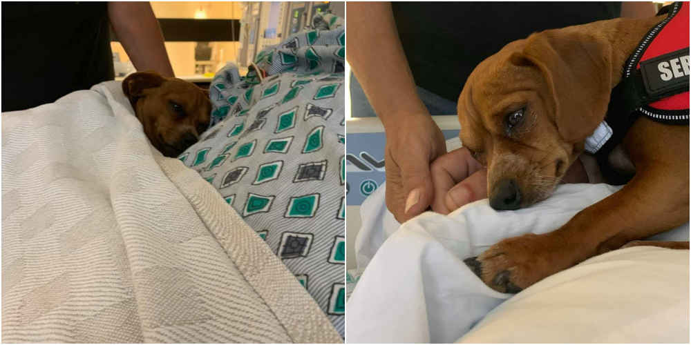 Loyal Dog Refuses To Leave Dad's Side Until The Very End