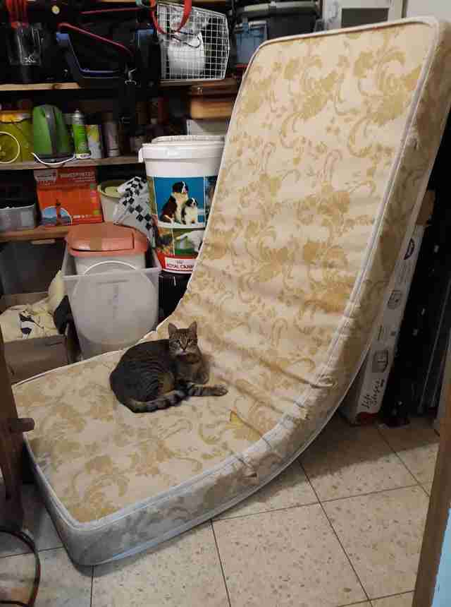 cats knock down mattress