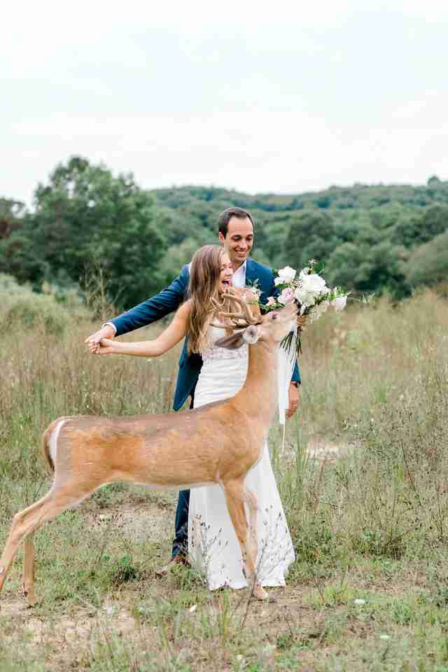 Wild deer eats bride's bouquet