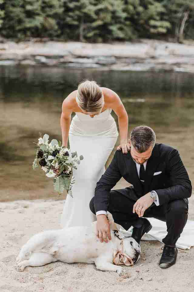 dog wedding photo shoot