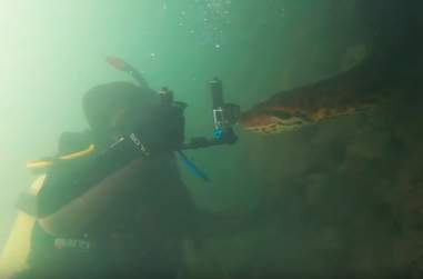 Diver swims with 23-foot anaconda