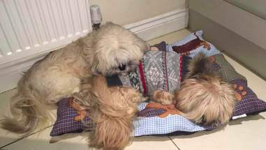 Dog best friends sleep together every night