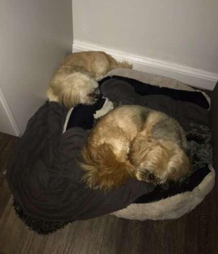 Dog sleeps next to his sick best friend