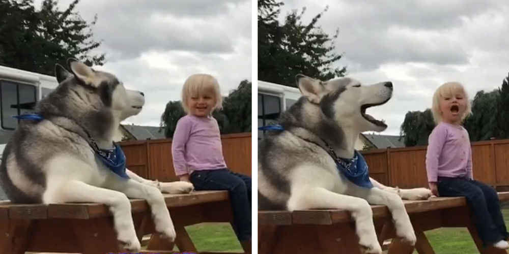 Little Girl And Dog Have Full Conversation In A Language All Their Own