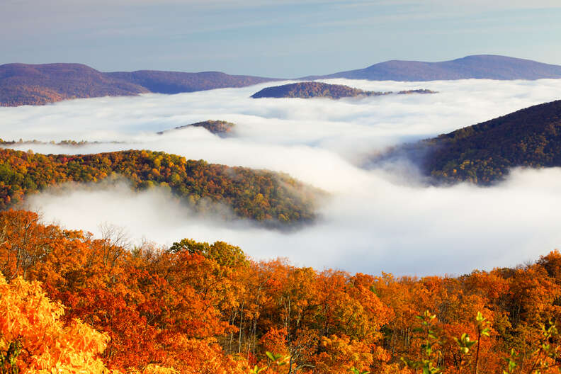 fog floating above mountains and forests