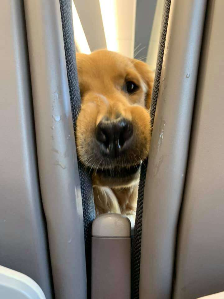 puppy on plane
