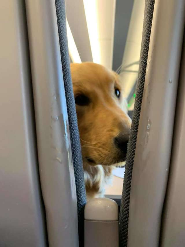 puppy on the plane