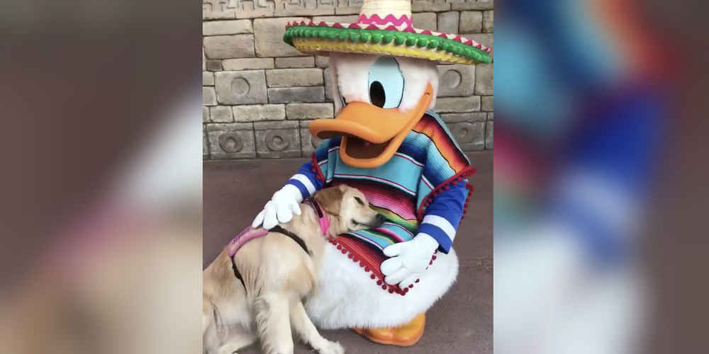 Dog Cuddles Up To Favorite Disney Character And Refuses To Move