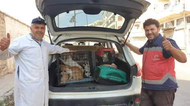 Two men standing in front of cat packed with rescued cats