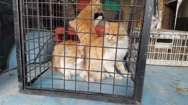 Rescued cats in cages