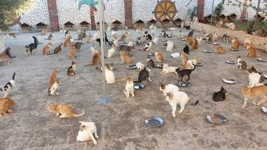 Mealtime at the famous cat sanctuary in Aleppo