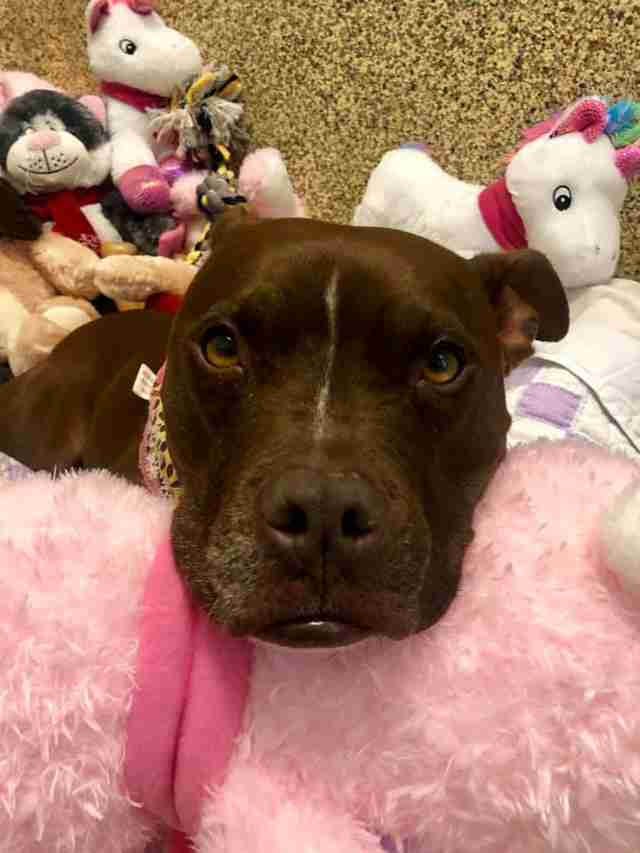 Sad looking dog lying on stuffed animals