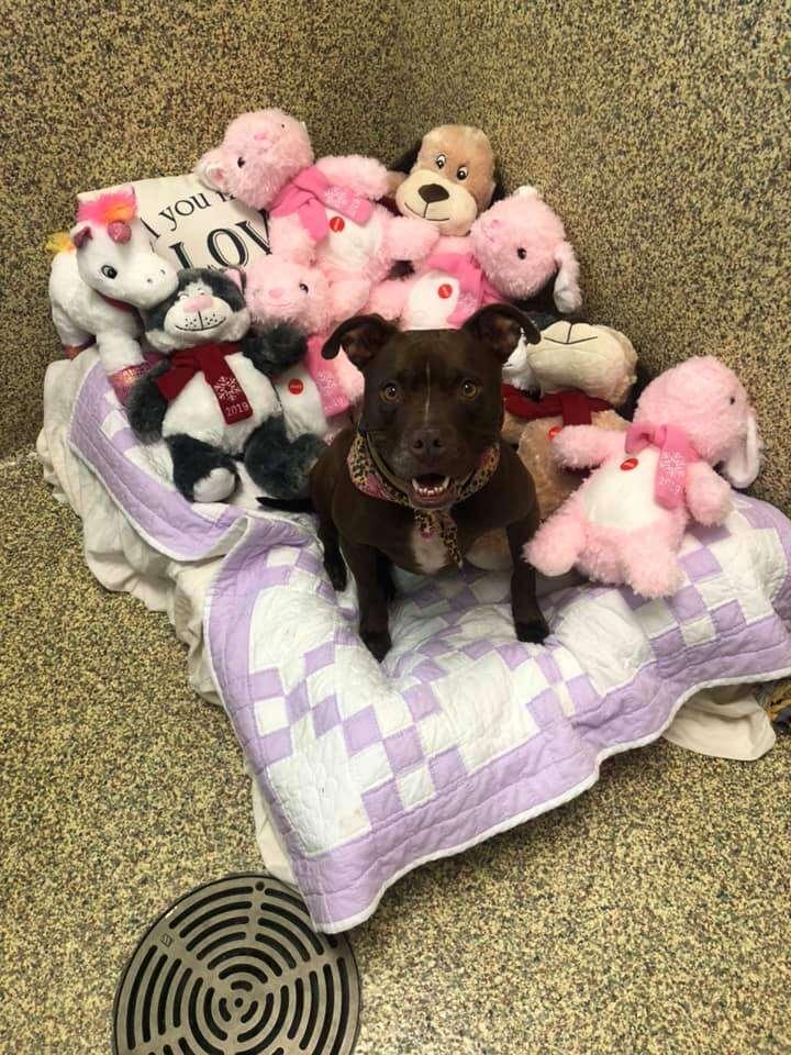 Dog sleeping on bed amongst stuffed animals