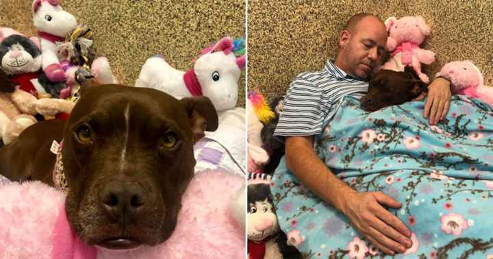 Dog Was Alone In Shelter For 400 Days — So Guy Moved Into Her Kennel