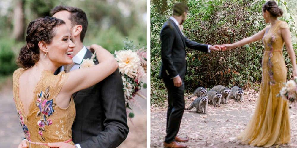 Gang Of Adorable Raccoons Crashes Couple's Wedding Photo Shoot