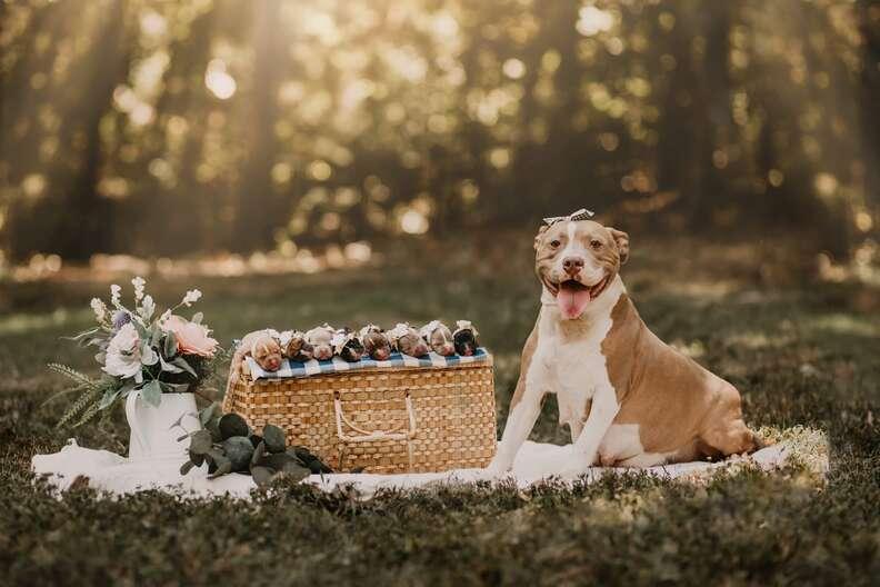 newborn puppy photo shoot