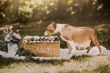 newborn puppies photo shoot