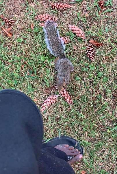 Squirrel Mom Stops Woman And Leads Her To Baby Who Needs Help