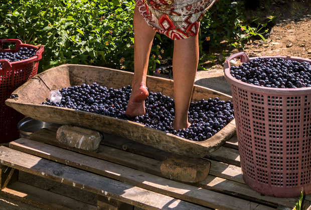 Attention Everyone: It Is Grape-Stomping Season