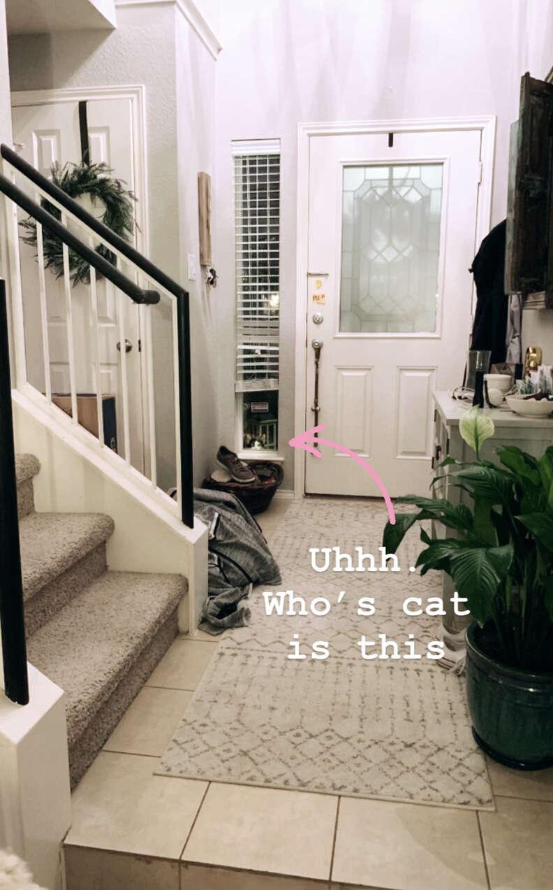 Cat peeking through front door of house