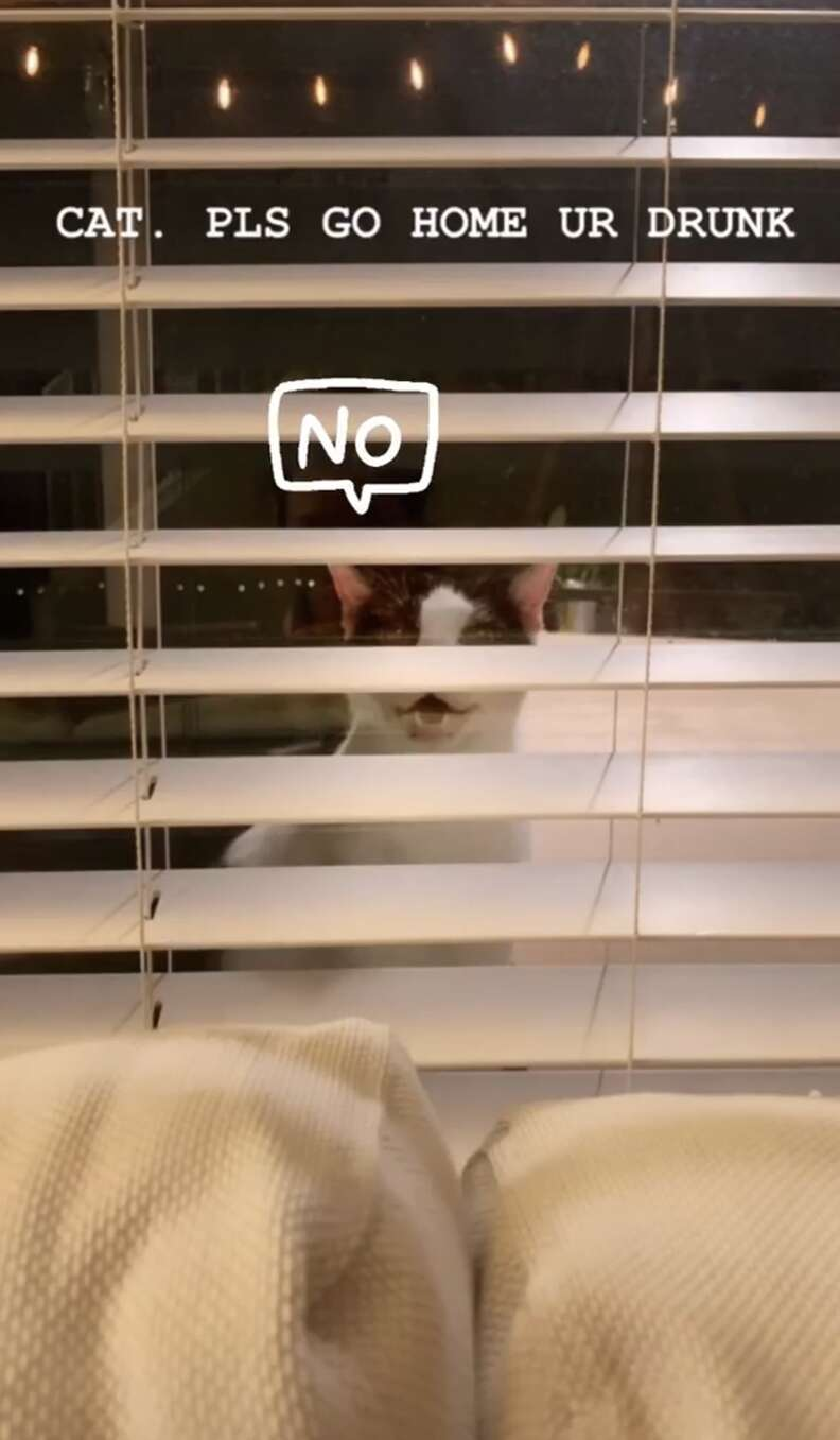 Cat staring through venetian blinds into house