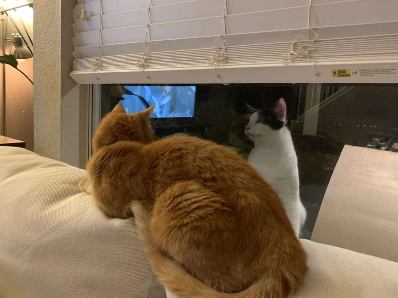 Cat watching other cat through the window