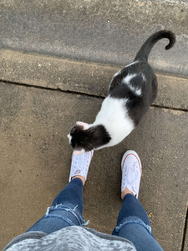 Cat rubbing against woman's ankles