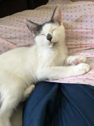 Cat snuggling on fabric