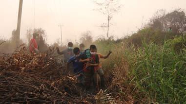 Rescuers loading rescued orangutan onto truck