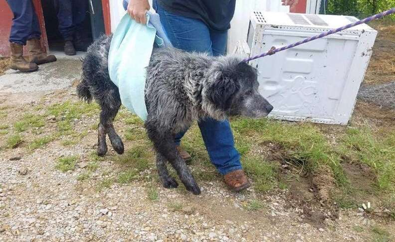 Dog being carried out of shelter in sling