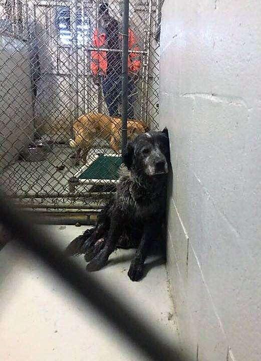 Sad shelter dog sitting in kennel