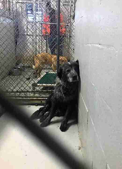 Sad shelter dog sitting in kennel