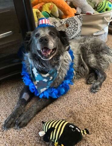 Smiling dog with costume on
