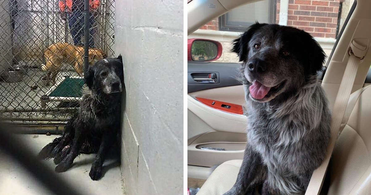 'Broken' Dog Can't Stop Smiling When He Realizes He's Being Rescued