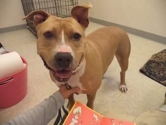 Smiling dog inside kennel
