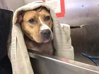 Dog getting a bath