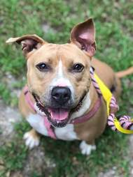 Smiling dog looking up at camera