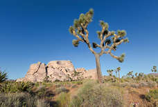 The Ultimate Joshua Tree National Park Travel Guide