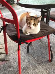 Cat sleeping on chair at cafe