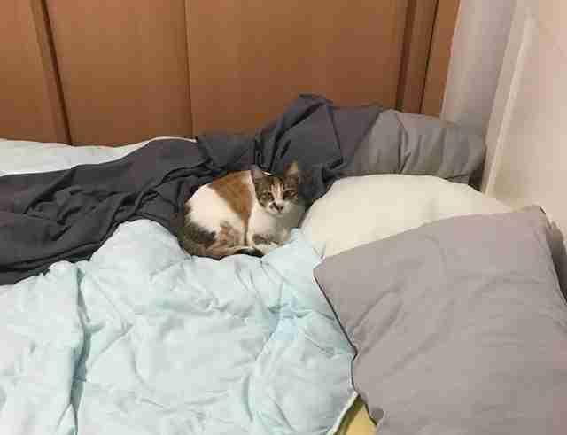 Cat sleeping in guy's bed