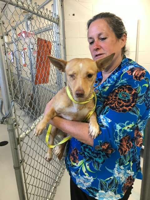 Woman holding dog in front of kennel at shelter