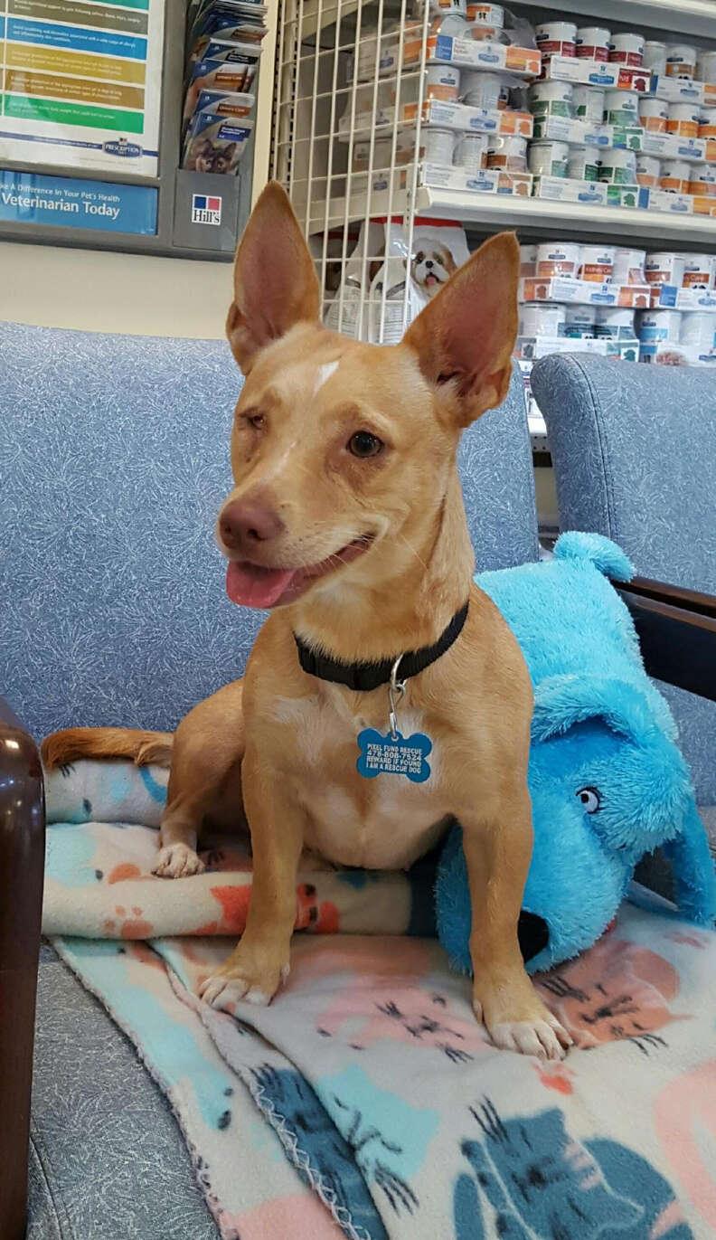 Smiling dog at vet