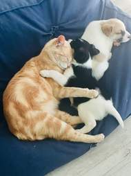 Cat mom snuggles her adopted puppy