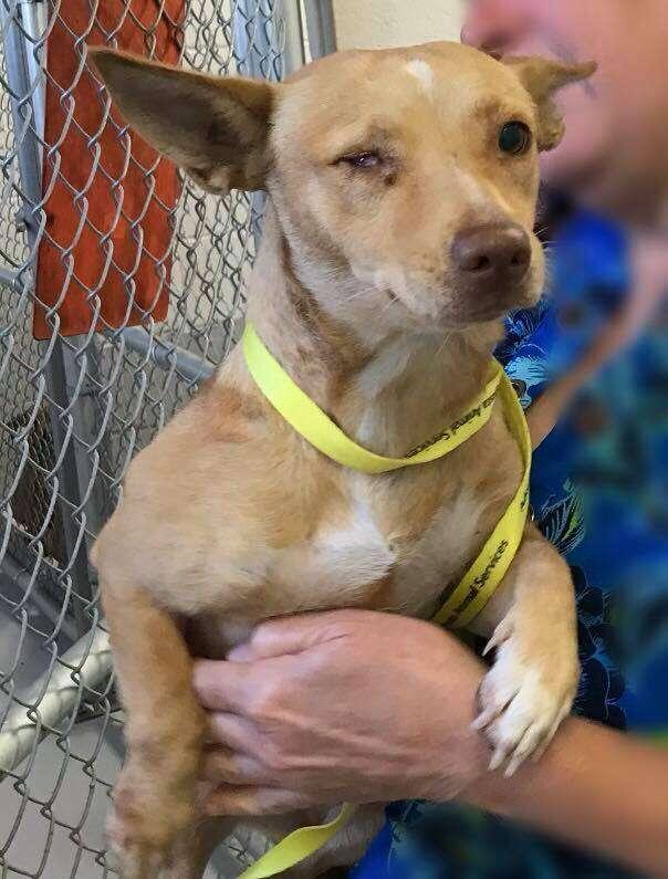 Woman holding scared shelter dog