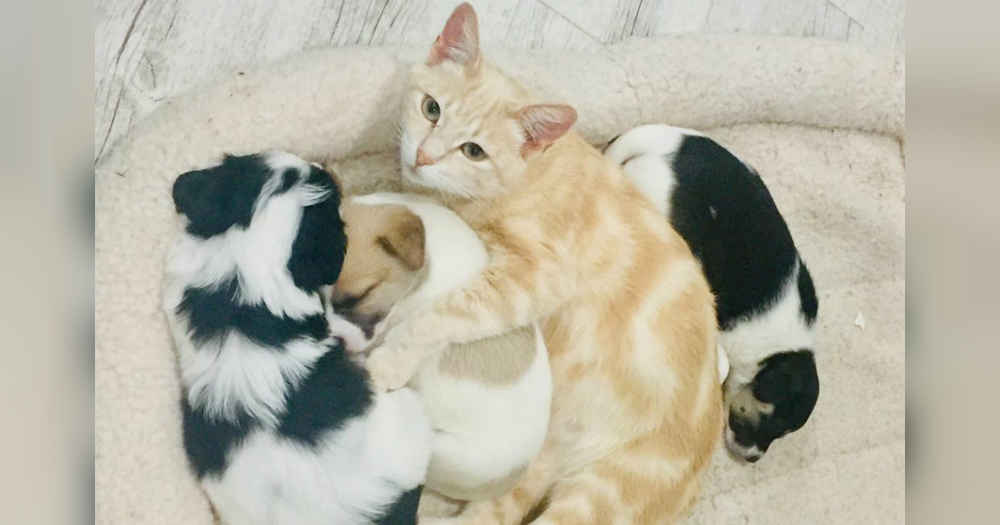 Cat Mom Adopts Orphaned Litter Of Puppies And Raises Them As Her Own