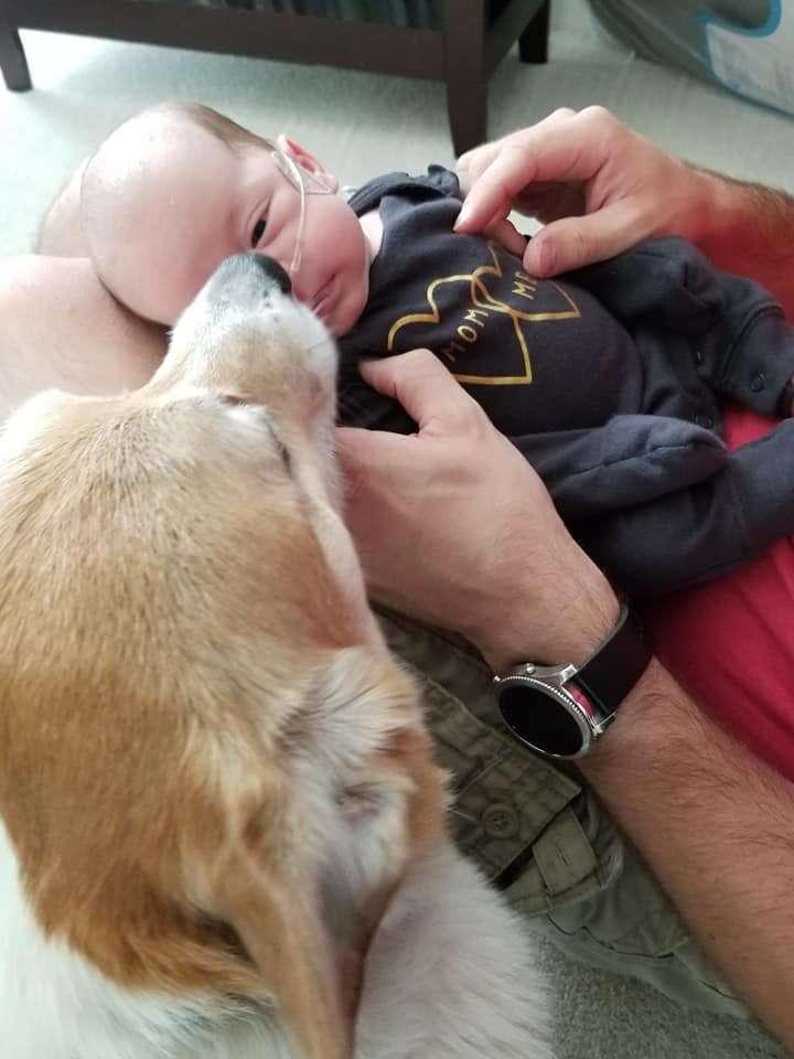corgi watches babies
