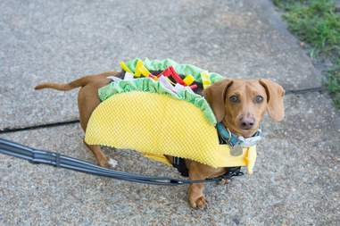 cheekwood dog costumes