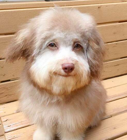 Dog with humanlike face