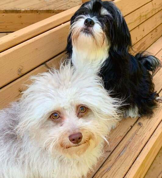 Dogs sitting on wooden bench
